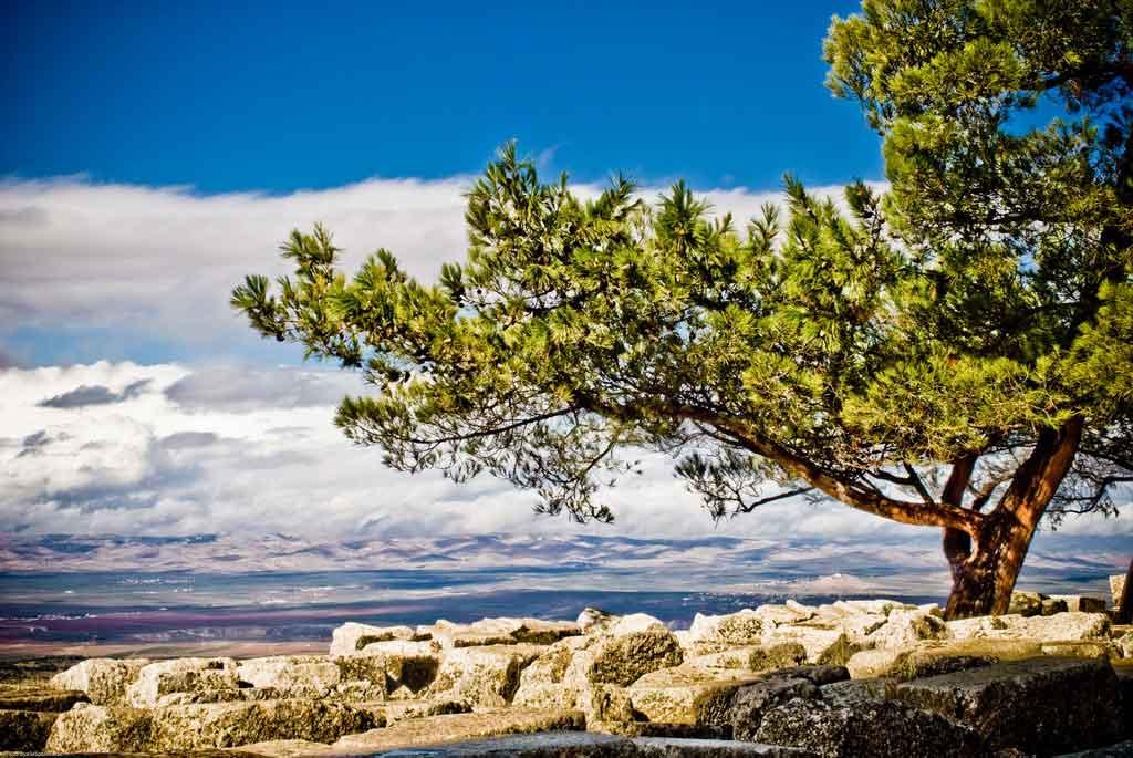 Tree_on_a_mountain_-_syria